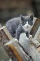 Kattepuser elsker å klatre