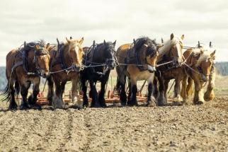Seks hester foran harven på Tomb Jordbruksskole, Jørgen Kvarme