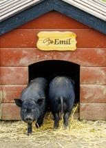 Emil og griseknoen