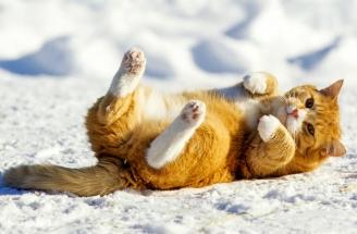 Pusen ruller seg i sneen