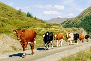 NRF kyr i Rondane på tur