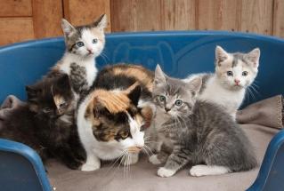 Kattemor med pusungene sine