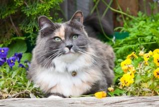 Vakre pusekatten i blomsterbedet